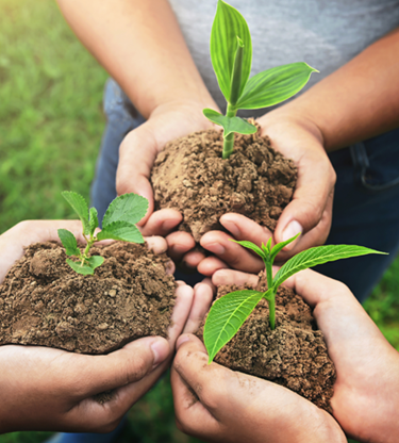 Saving the environment through planting plants.